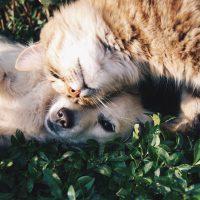 pets dog cat