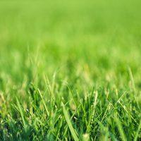 grass-pitch