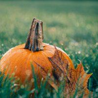 pumpkin-autumn-halloween