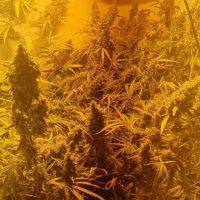 cannabis seizure west cork