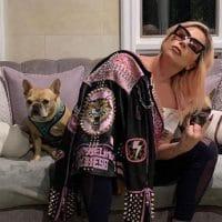 Lady Gaga dog kidnapped