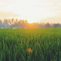 sunshine sunset sun weather